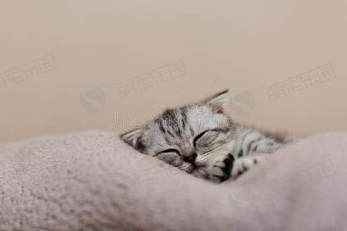 猫咪总是喜欢睡在床上怎么办?